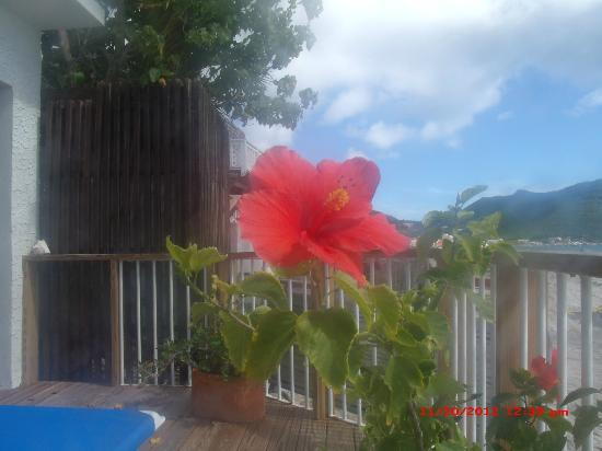 Villas on Great Bay: Flower on the deck