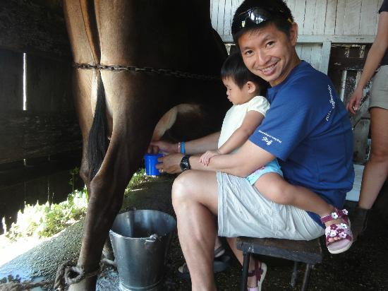 Cedar Glen Farmstay: Milking cow