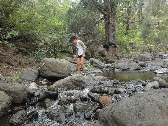 Cedar Glen Farmstay: Creek! Rock hopping