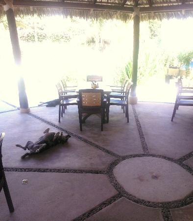 Manta Raya Hotel: The dogs have the right idea-- midday under the restaurant palapa