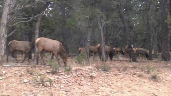 Redstone Tours: Elk on the tour