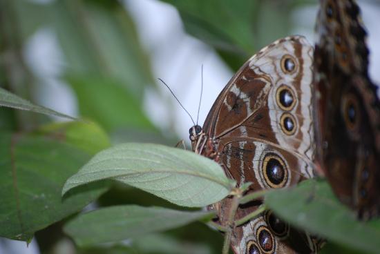 Blue River Resort & Hot Springs : Butterfly garden