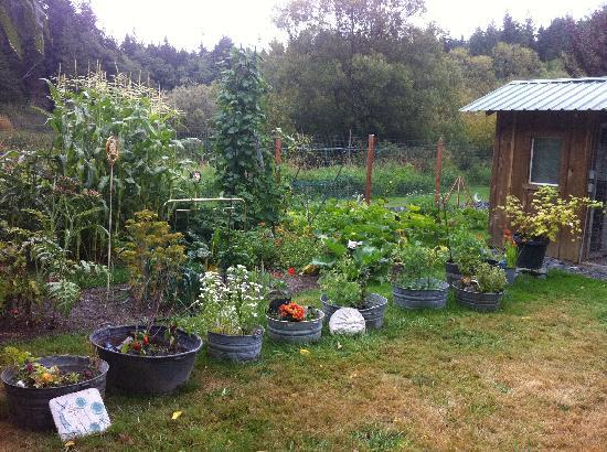Someday Farm Vegan Bed and Breakfast: The Garden