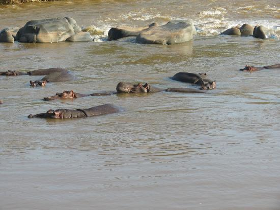 Tremisana Game Lodge: Hippo's on game walk
