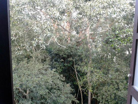 Aranya Nivas KTDC: View from room window