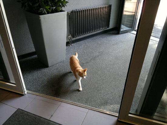 WestCord City Centre Hotel Amsterdam: there no location in Amsterdam without a cat :)