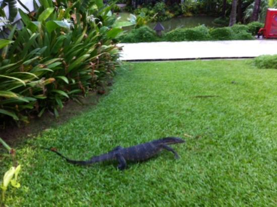 The Racha: Big Lizard at Racha 