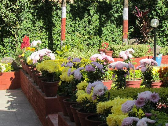 Hotel Buddha: Garden View