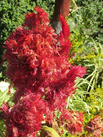 هوتل بوذا: Amazing flowers in the garden 