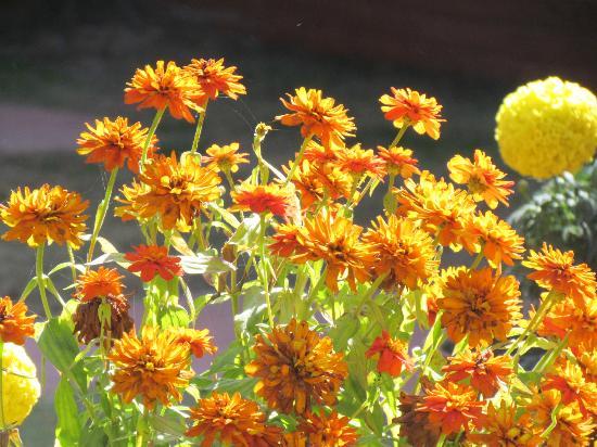هوتل بوذا: Awesome buch of flowers 