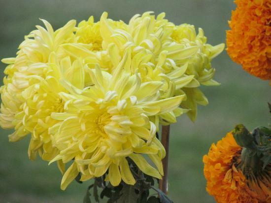 هوتل بوذا: Lovely flowers 