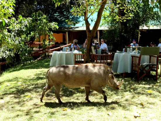 Governor's Camp: Breakfast with local warthog