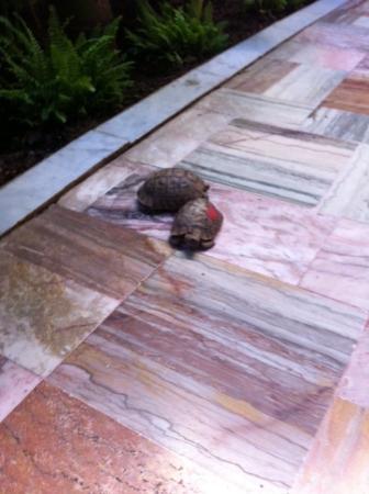 El Fenn: Huis schildpadjes in de lounge tuin