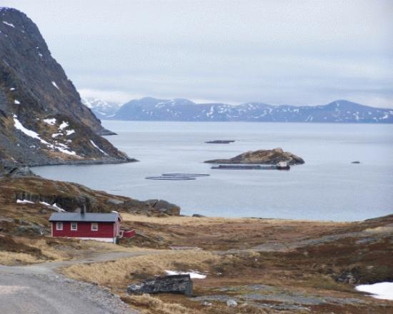 Myrfjord Sjohus - Havoysund: Myrfjord