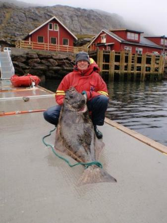Havoysund, Norwegia: Guest with fresh fish !