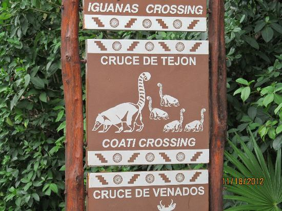 Luxury Bahia Principe Sian Ka'an Don Pablo Collection: Watch out for the coati's and iguana's...no kidding!