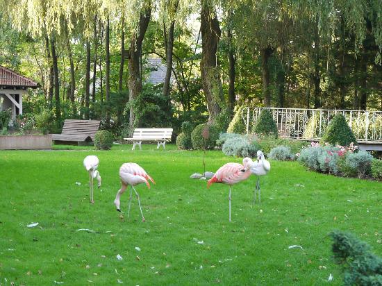 Parkhotel Krone : Jardim com flamingos.
