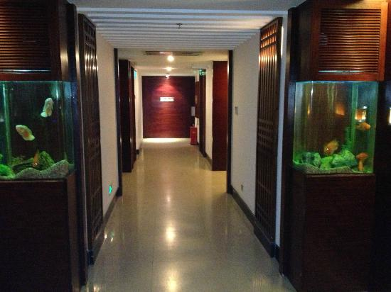 Marina Hotel: Each room has it's own fish tank outside the door