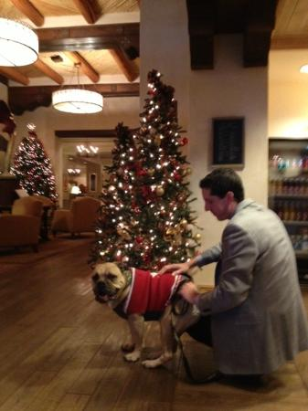 Eldorado Hotel & Spa: Pet friendly staff throughout...and many holiday touches adding a festive touch to a December vi