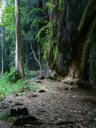 Green Climbers Home: Climbing area