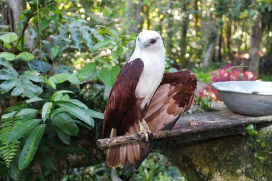 Philippine Eagle Centre: /another attraction.... i am cute!