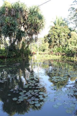 Philippine Eagle Centre: the small lagoon