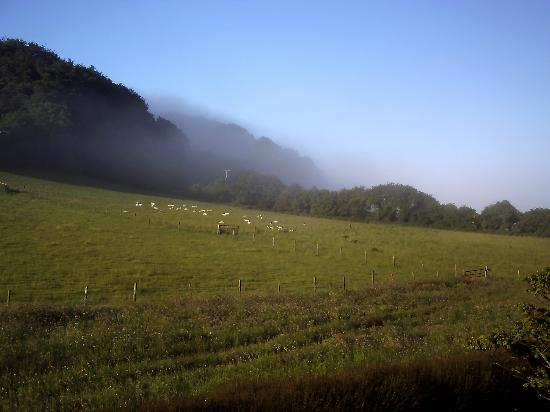 Looking over misty fields - The Paddocks B&B
