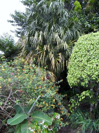 بوكويت جاردن إن هوتل: Garden View 