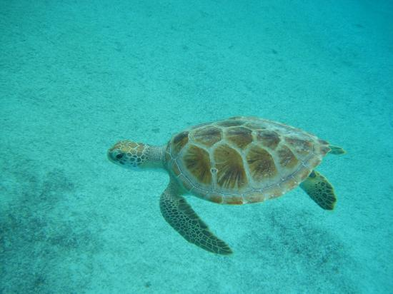 Sand Dollar Condominiums: Our little friend under the sea