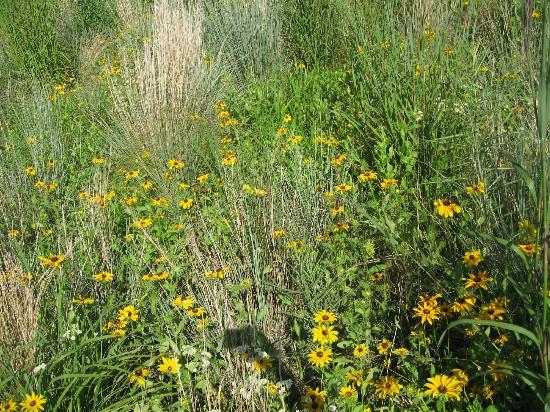 Adkins Arboretum: Native plants bloom in the meadow that borders 4 miles of paths