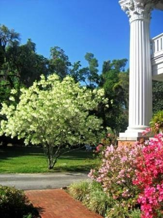 Herlong Mansion Bed and Breakfast Inn : Spring