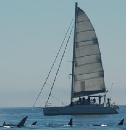 Gato Verde Adventure Sailing - Day Tours