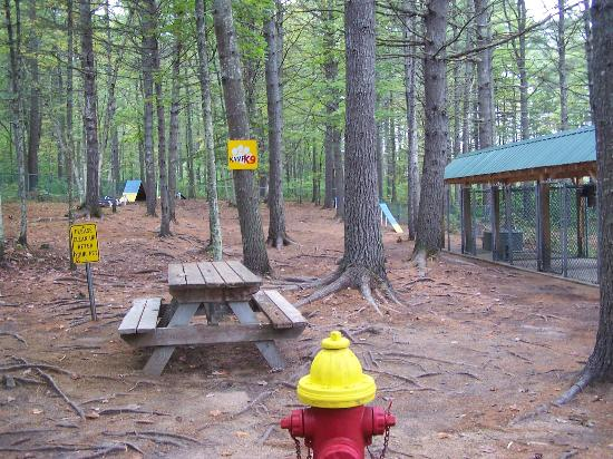 Chocorua Camping Village: Dog Park, Daycare Kennels and Agility Course