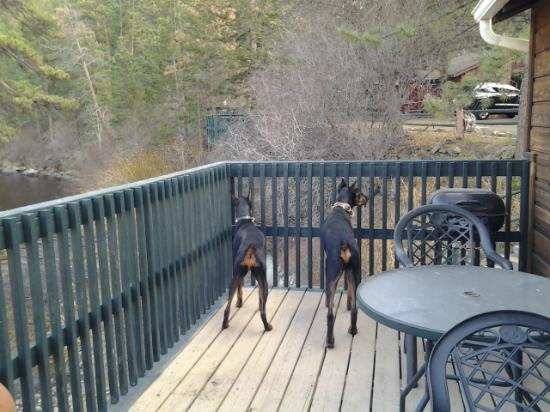 Rustic River Cabins: The dogs loved watching the world from the private deck of cabin 8