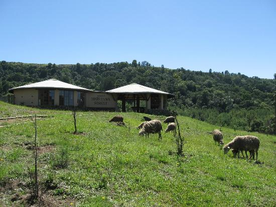 Bulwer, Sudáfrica: Visitors' centre & organic lawnmowers