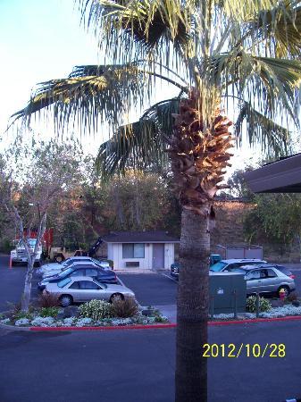BEST WESTERN Shadow Inn: parking under the palms