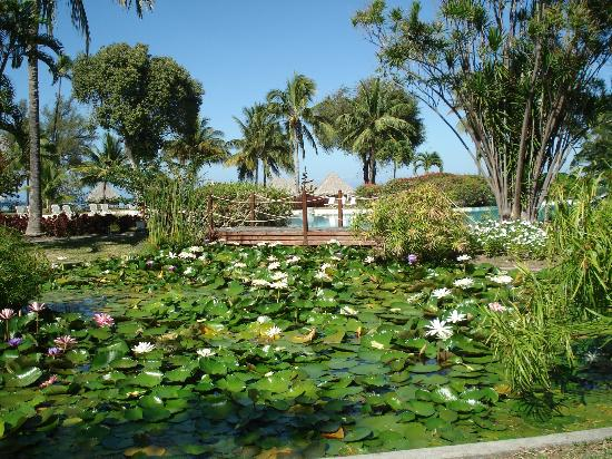 Le Meridien Tahiti: Lagoon with water lillies
