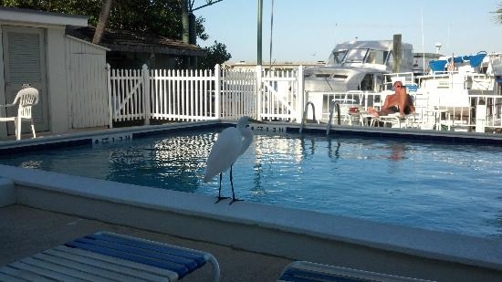 Harborside Motel & Marina: pool