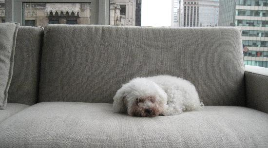 Andaz 5th Avenue: Minnie relaxing on the sofa