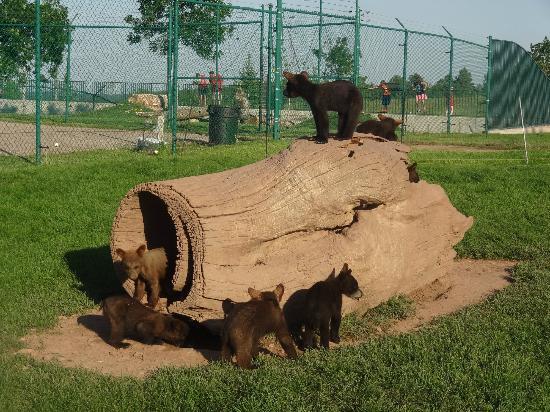 Bear Country USA照片