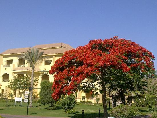 Movenpick Hotel Cairo-Media City: Love it