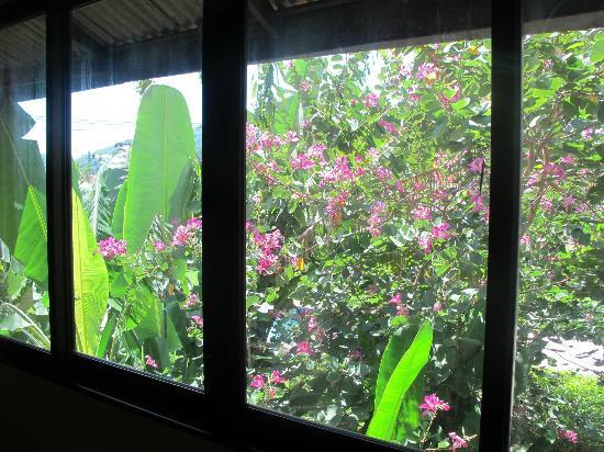 Popeye's Place Guesthouse : przez okno :)