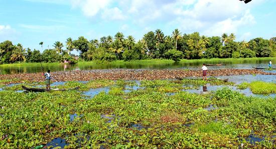 Green Palace Kerala Resort : Ducks