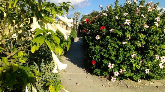 "Hotel Ta' Cenc: flowery ""corridor"""