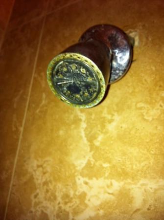 ستارليت هوتل: Starlite Hotel Miami room 404 mineral deposits on bathroom shower head. 