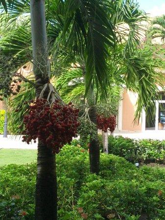 Majestic Colonial Punta Cana: Végétation
