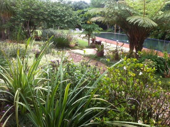 Ambience Inn: jardin piscine