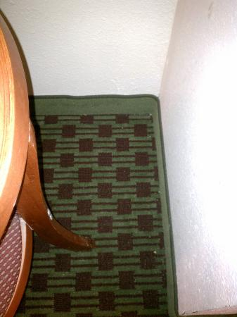 Quality Inn Historic East - Busch Gardens Area: filthy carpet