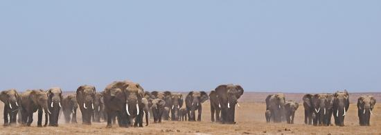 Porini Amboseli Camp: the BB group of elephants
