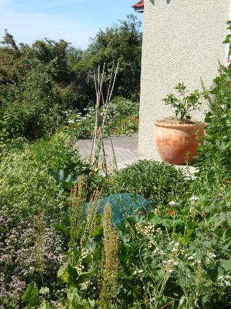 Featherstone B&B: Looking towards vegetable garden